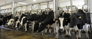 Dairy 08
